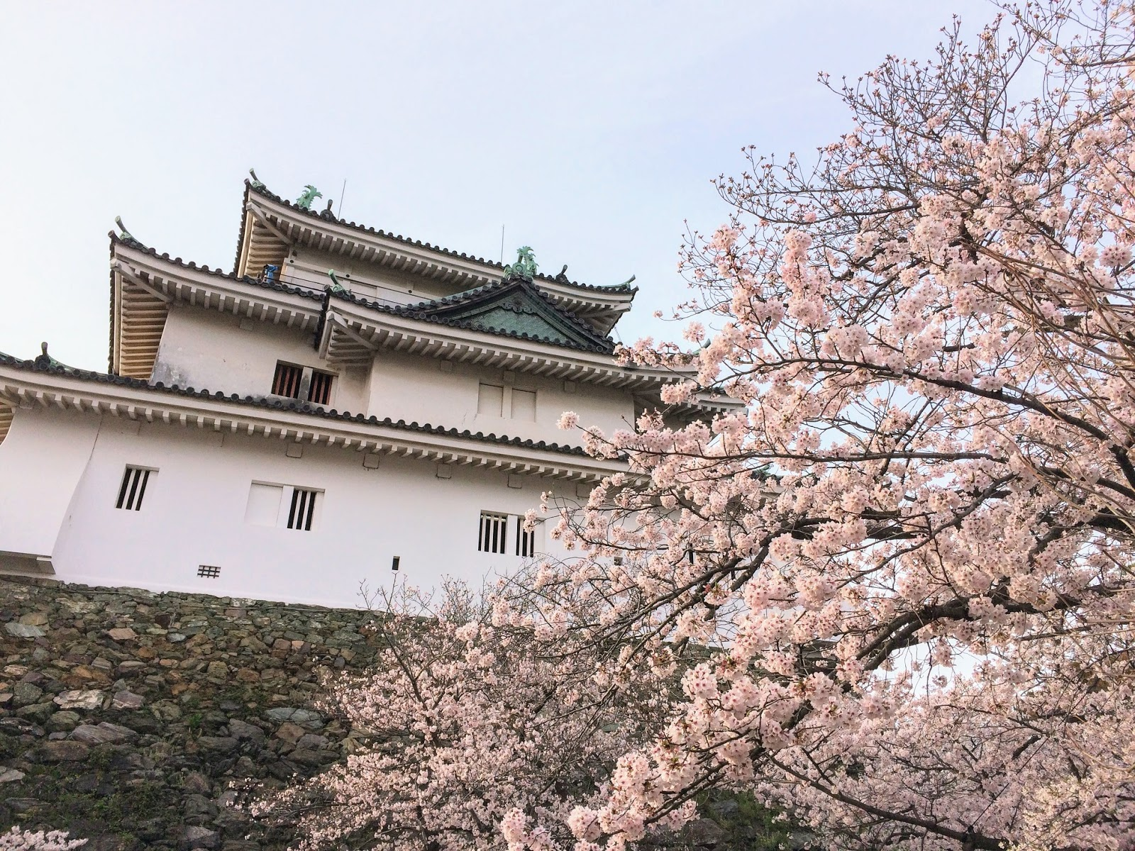 Wakayama castle with cherry blossoms